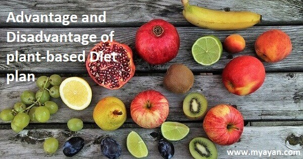 Advantages and Disadvantages of Plant Based Diet plan