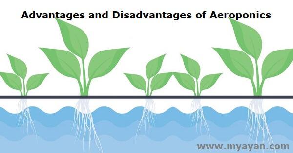 Advantages and Disadvantages of Aeroponics