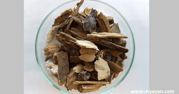 What are Advantages and Disadvantages of Biomass Energy