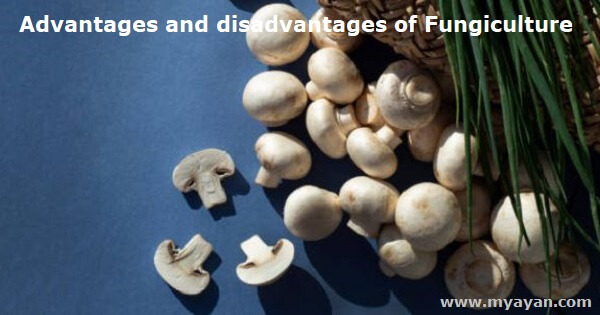 Advantages and disadvantages of Fungiculture