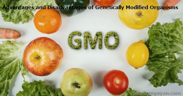 Advantages and Disadvantages of Genetically Modified Organisms