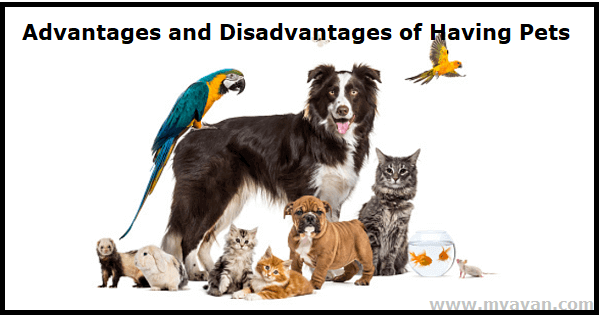 What are the Advantages and Disadvantages of Having Pets?