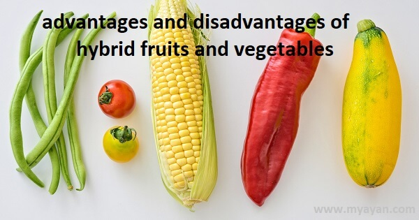 Advantages and Disadvantages of Hybrid Fruits and Vegetables