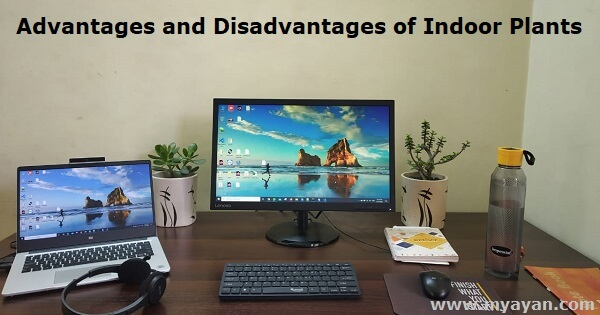 Advantages and Disadvantages of Indoor Plants