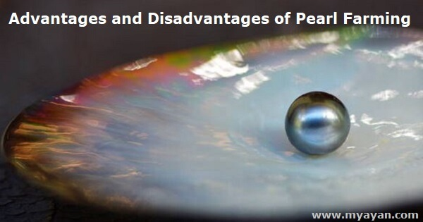 Advantages and Disadvantages of Pearl Farming