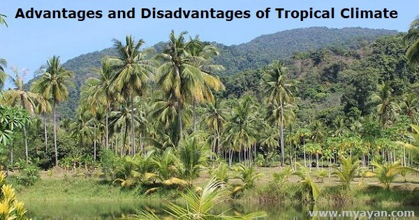 Advantages and Disadvantages of Tropical Climate
