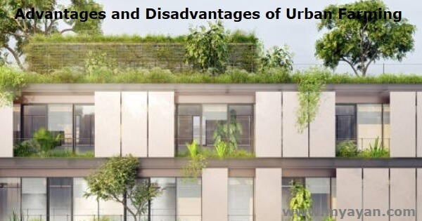 Advantages and Disadvantages of Urban Farming
