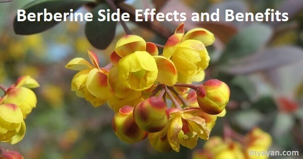 Berberine side effects and benefits - Pros and Cons