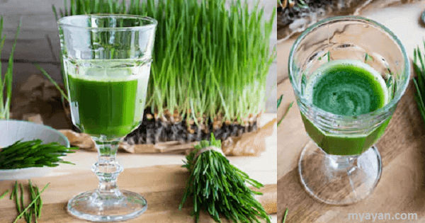 Benefits and Risks of Wheatgrass Powder, Juice, & Pills